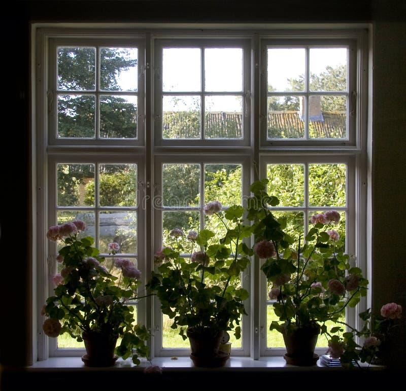 Blumenfenster stockbilder