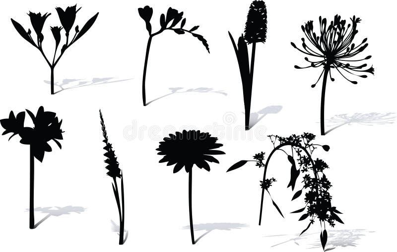 Blumenform und -schatten. stock abbildung