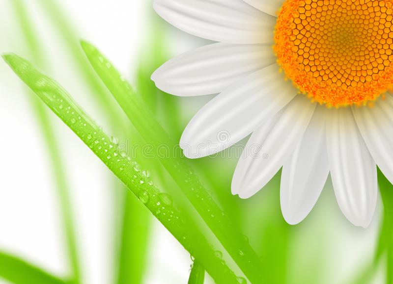 Blumenfrühlingshintergrund lizenzfreie abbildung