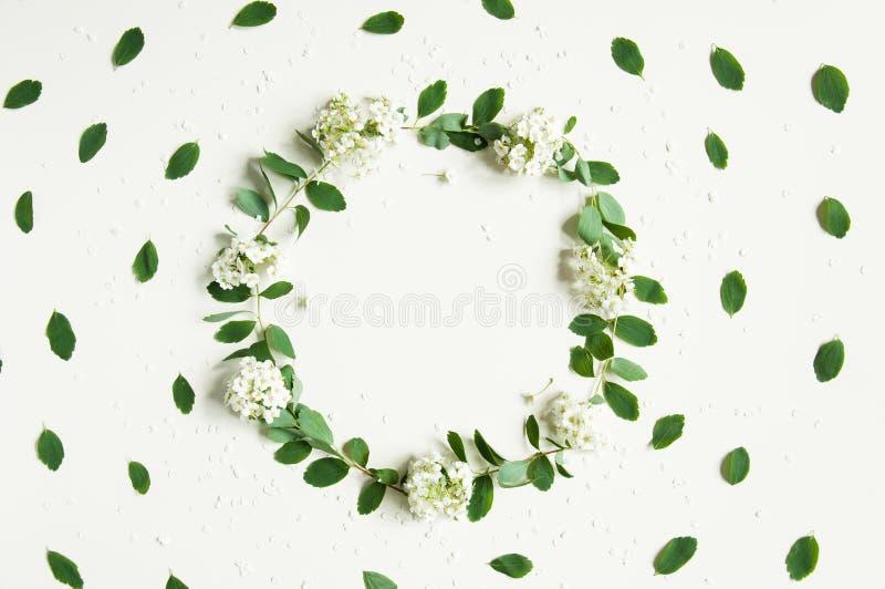 Blumenfrühlingshintergrund auf Weiß Ein Kranz des Grüns Gr?nbl?tter und wei?e Blumen Glückwunschhintergrund für den Feiertag lizenzfreies stockbild
