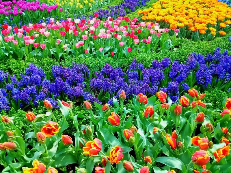 Blumengärten lizenzfreies stockfoto