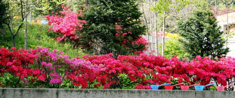 Blumengarten stockfotos