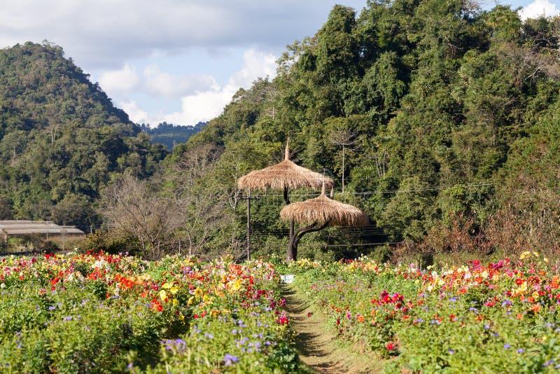 Blumengarten bei Doi Ang Khang, Chiang Mai, Thailand lizenzfreie stockbilder