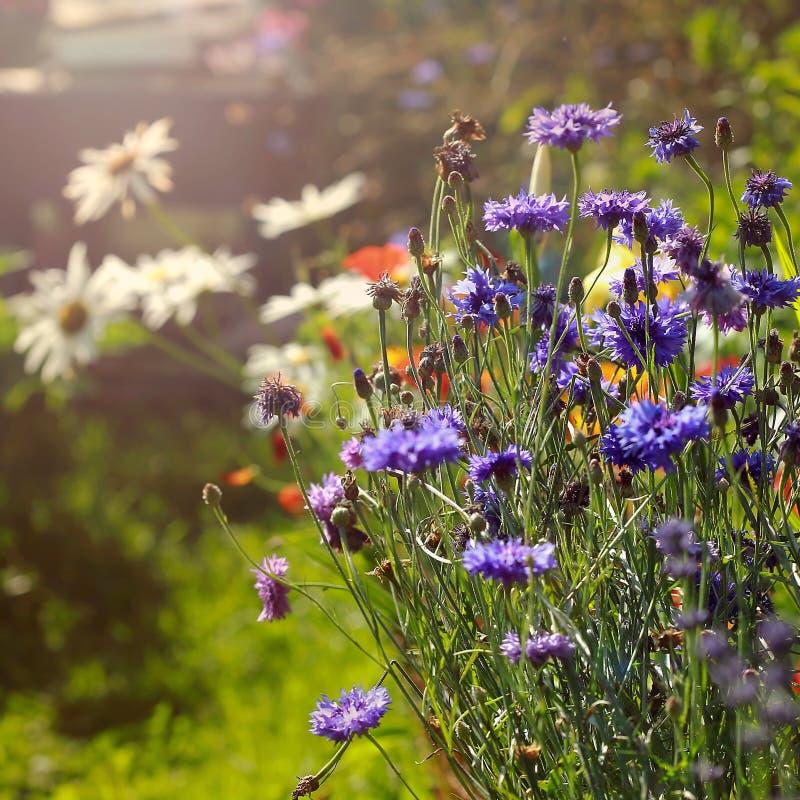 Blumengarten in der Sonne lizenzfreie stockfotos
