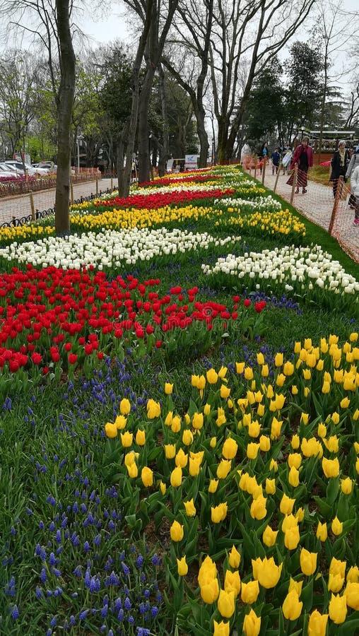 Blumengarten im emirgyan Park, Istanbul, die Türkei lizenzfreie stockbilder