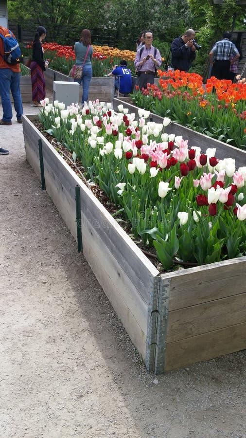 Blumengarten in Toronto lizenzfreie stockfotografie