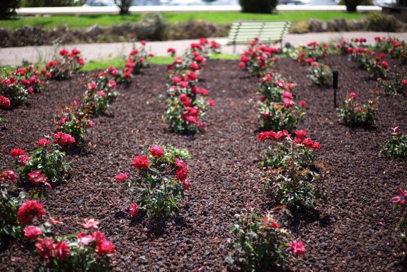 Blumengartenreihen lizenzfreies stockfoto