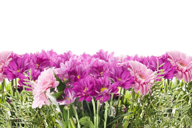 Blumengrenze mit den rosa Blumen, lokalisiert stockfotos