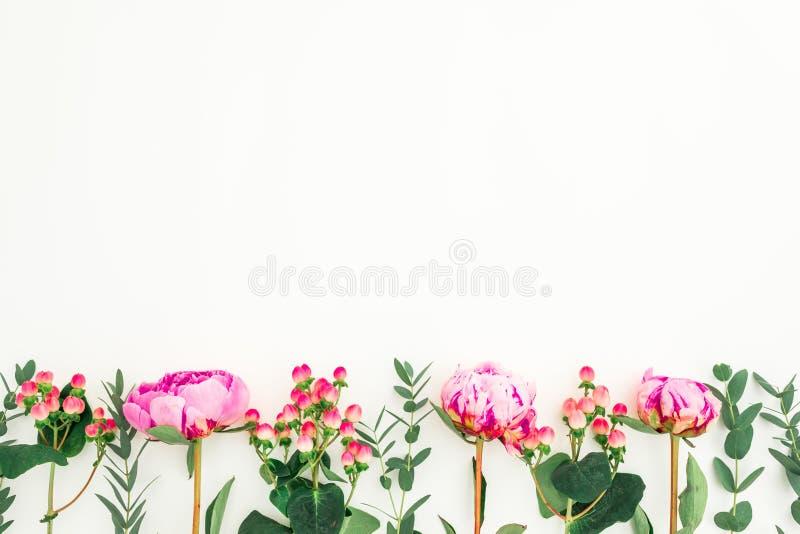 Blumengrenzrahmen von rosa Pfingstrosen, von Hypericum und von Eukalyptus auf weißem Hintergrund Flache Lage, Draufsicht lizenzfreies stockfoto