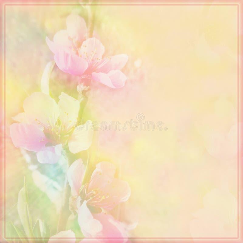 Blumengrußkarte mit Pfirsich blüht auf dunstigem Hintergrund in den Pastellfarben stock abbildung