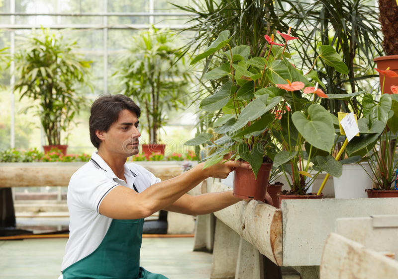 Blumenhändler lizenzfreie stockfotografie