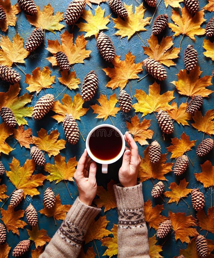Blumenherbsthintergrund Ein Becher Kaffee in ein Frau ` s Händen auf dem grünen Hintergrund mit gelben Ahornblättern und Kegeln stockbild