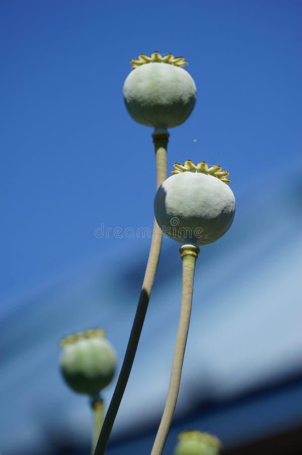 Blumenhintergrund der Blume Garden lizenzfreie stockfotografie