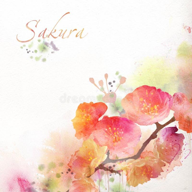 Blumenhintergrund mit Aquarell Kirschblüte lizenzfreie abbildung