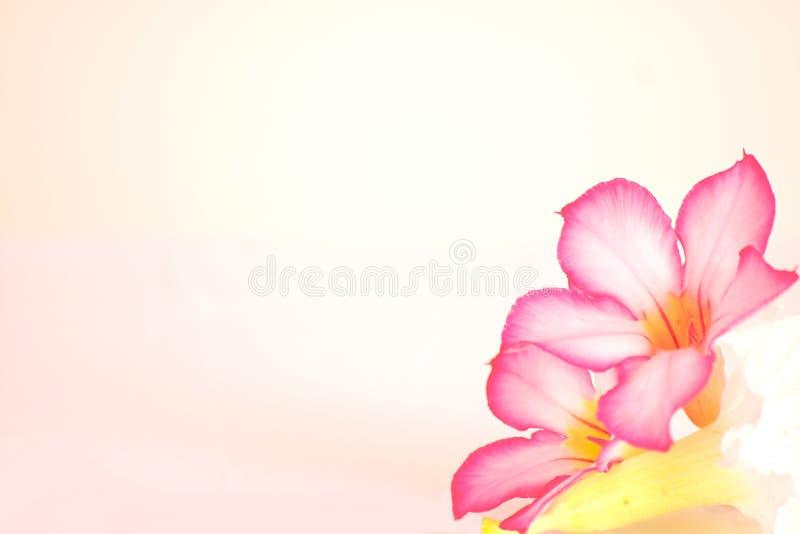 Blumenhintergrund mit brennenden Kerzen stockfotos
