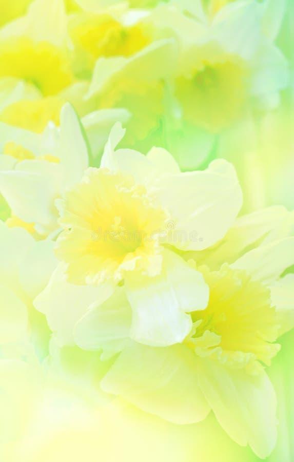Blumenhintergrund mit Narzisse lizenzfreies stockbild