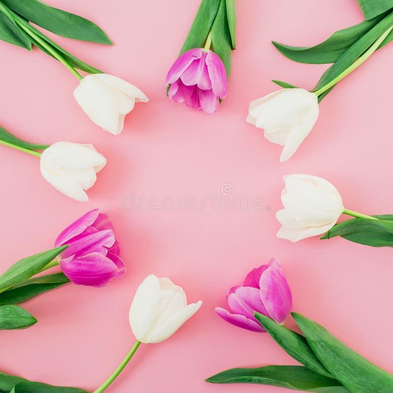 Blumenhintergrund mit Tulpen blüht auf rosa Pastellhintergrund Flache Lage, Draufsicht Frühlingszeithintergrund lizenzfreie stockfotografie