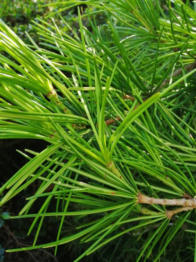 Blumenhintergrund oder Beschaffenheit Schön vom fordifferent Entwurf der grünen tropischen Blätter lizenzfreie stockfotografie