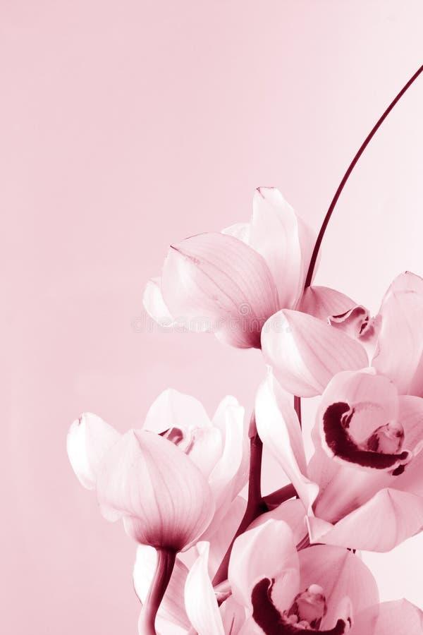 Blumenhintergrund: Orchideeliebe stockfotos