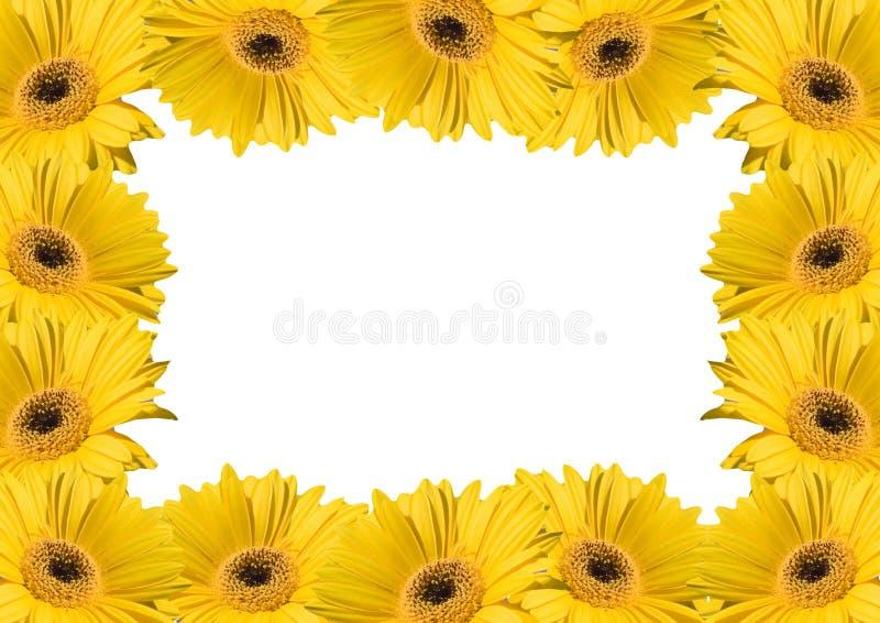 Blumenhintergrundfelder lizenzfreie stockbilder