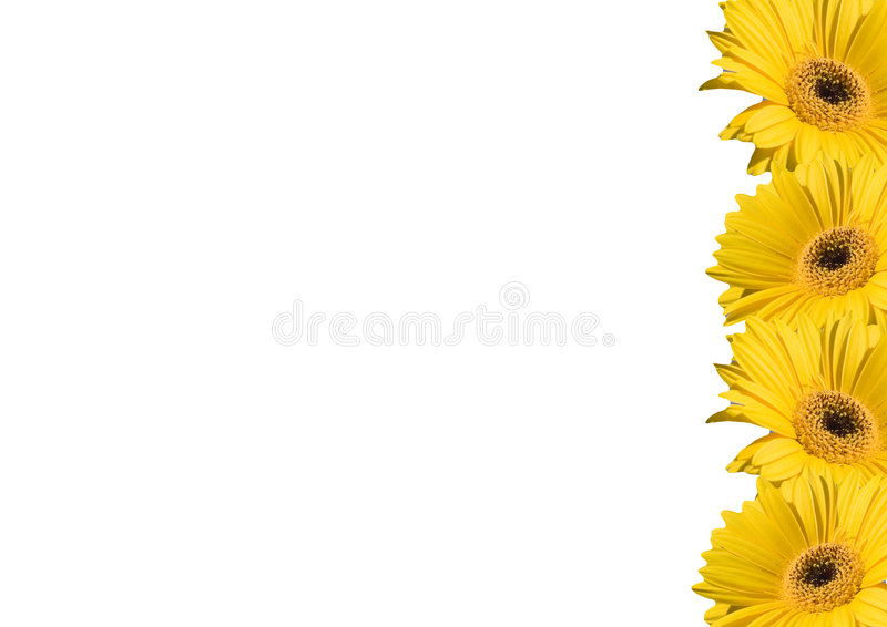 Blumenhintergrundfelder stockbild