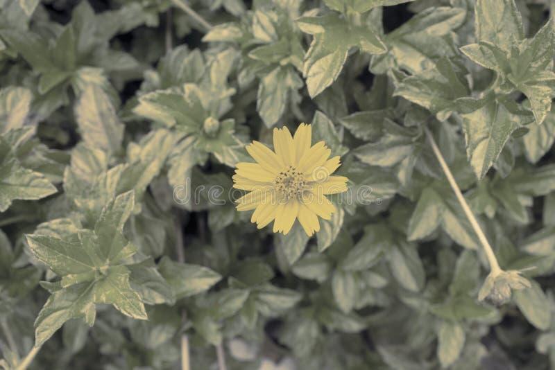 Blumenhintergrundweinlese lizenzfreie stockfotografie