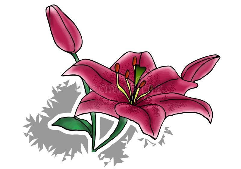 Blumenillustration - Lilie lizenzfreies stockbild
