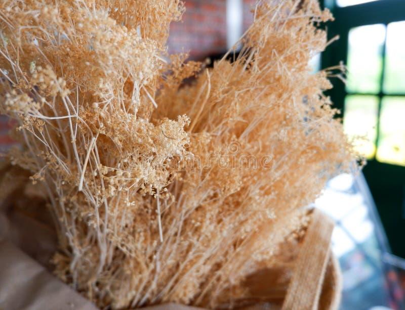 Blumenkoriander trocken lizenzfreie stockfotos