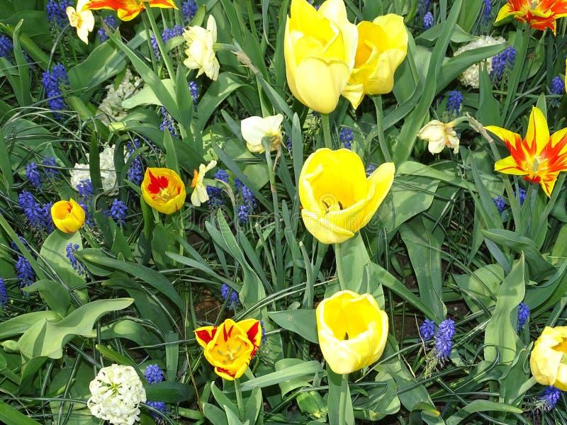 Blumenlager in den Niederlanden stockfotos