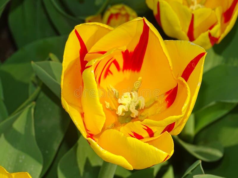 Blumenlager in den Niederlanden lizenzfreies stockbild