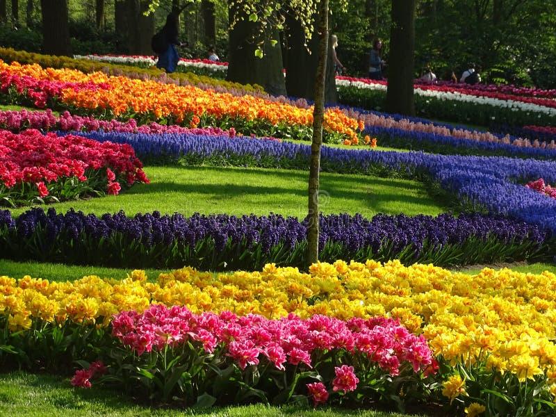 Blumenlager in den Niederlanden stockbild
