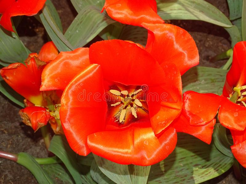 Blumenlager in den Niederlanden stockbilder