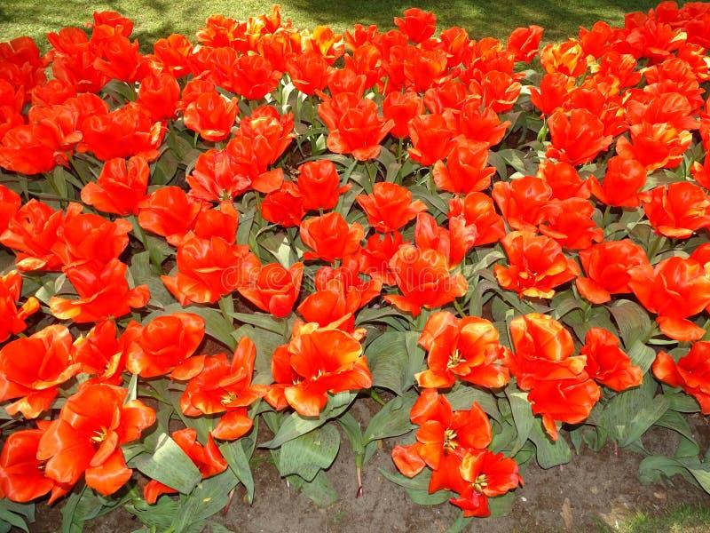 Blumenlager in den Niederlanden lizenzfreie stockfotografie