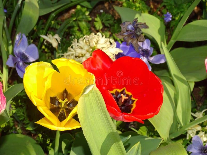 Blumenlager in den Niederlanden lizenzfreies stockfoto