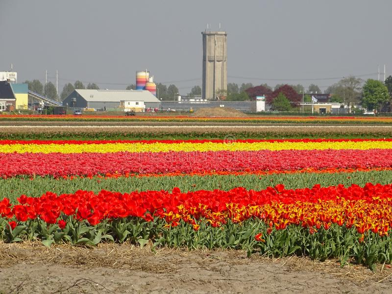 Blumenlager in den Niederlanden lizenzfreie stockfotos