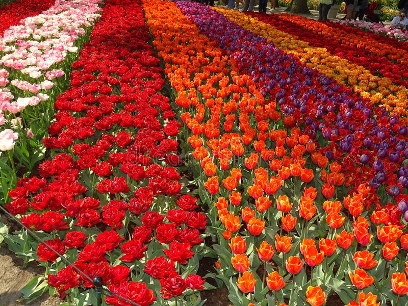 Blumenlager in den Niederlanden stockfoto