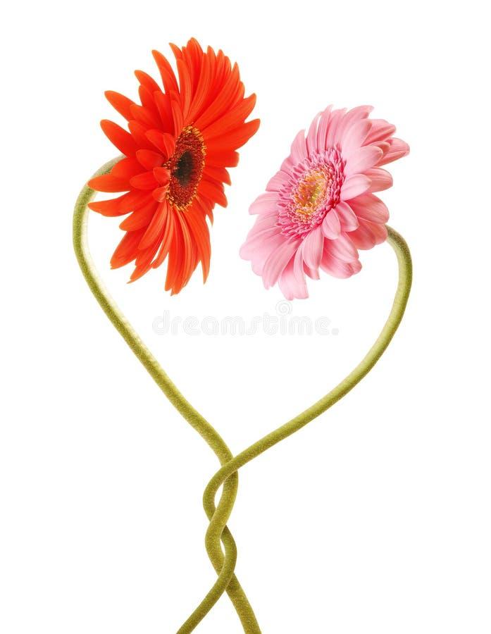 Blumenliebe lizenzfreies stockbild