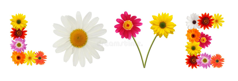 Blumenliebe stockfoto