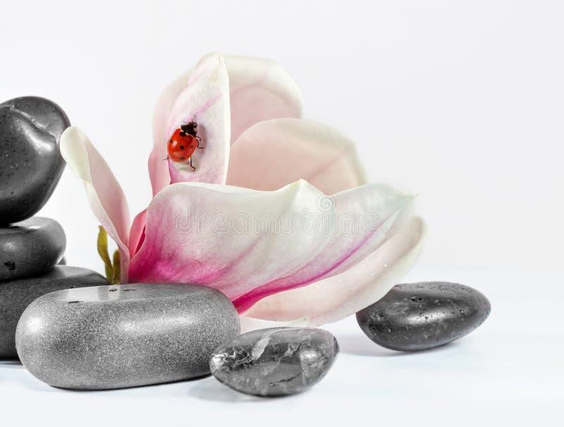 Blumenmagnolie. lizenzfreies stockfoto