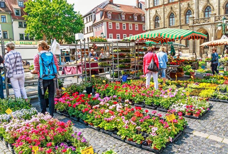 Blumenmarkt im Marktplatz vor dem Rathaus in Weimar, Deutschland stockfoto