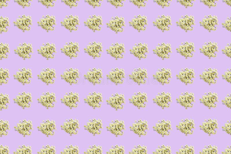Blumenmuster einer Reihe Chrysanthemen auf einer rosa flachen Lage der Draufsicht des Hintergrundes stock abbildung