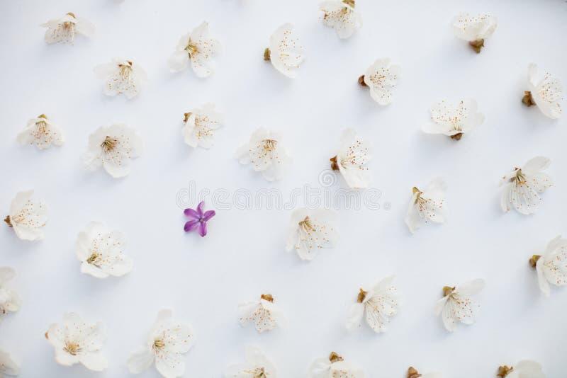 Blumenmuster-Hintergrund lizenzfreies stockbild