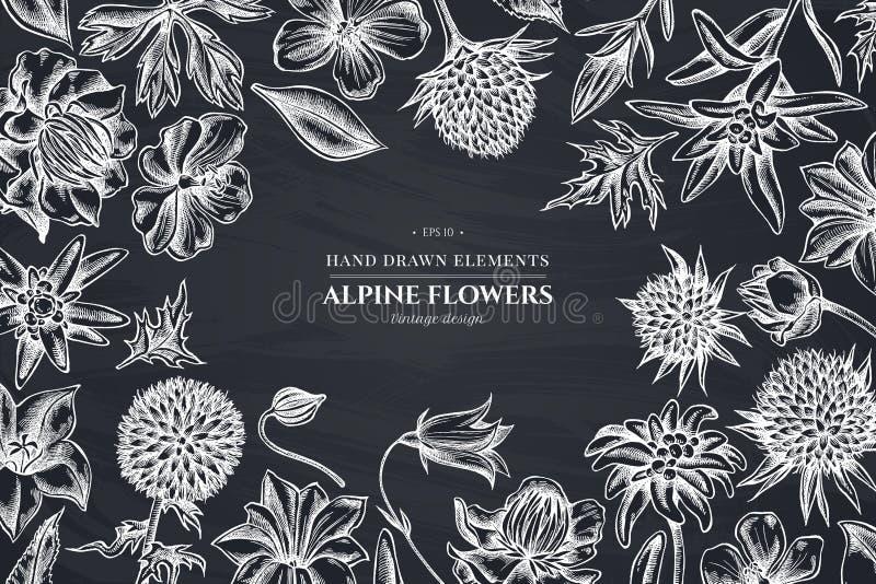 Blumenmuster mit Kreideglockenblume, Edelweiß, globethistle, globeflower, Wiesenpelargonie, Enzian lizenzfreie abbildung