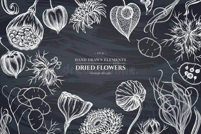 Blumenmuster mit Kreideschwarzkümmel, Federgras, Helichrysum, Lotos, Lunaria, Physalis lizenzfreie abbildung