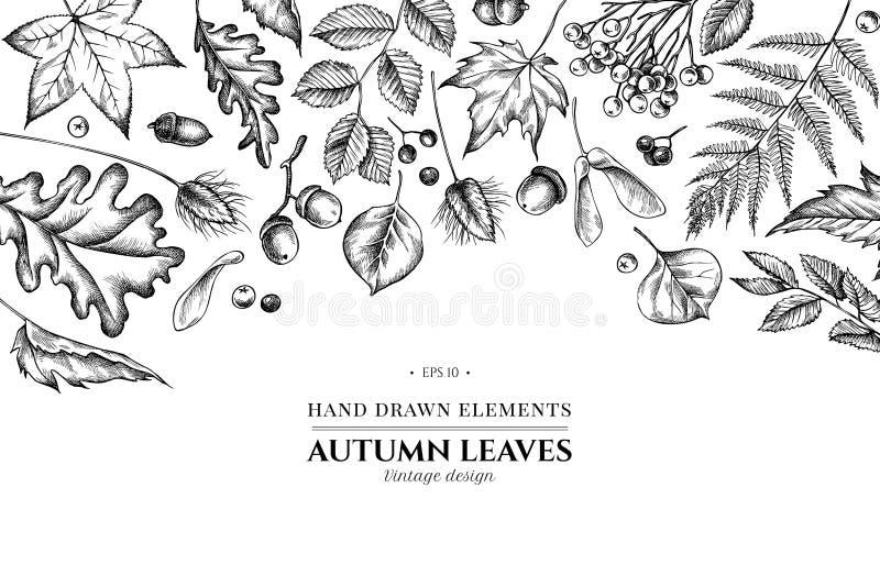 Blumenmuster mit schwarz-weißen Gewölben, Rowan, Eichel, Buchse, Farn, Ahorn, Birke, Ahornblättern, Laguren stock abbildung