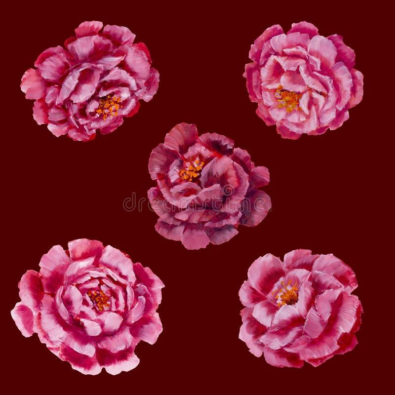 Blumenmuster - rosa Pfingstrosen, Rosenölgemälde stock abbildung