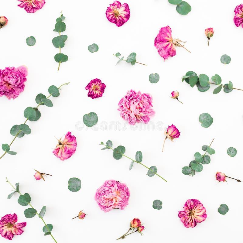 Blumenmuster von getrockneten rosa Blumen und von Eukalyptusniederlassungen auf weißem Hintergrund Flache Lage, Draufsicht Rosa H stockbilder