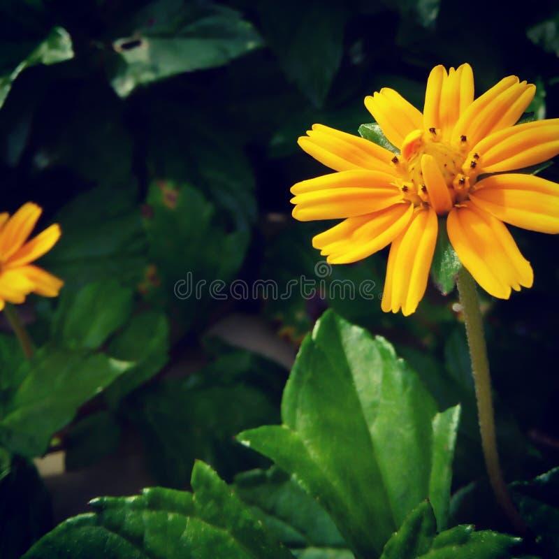 Blumennatur stockbilder