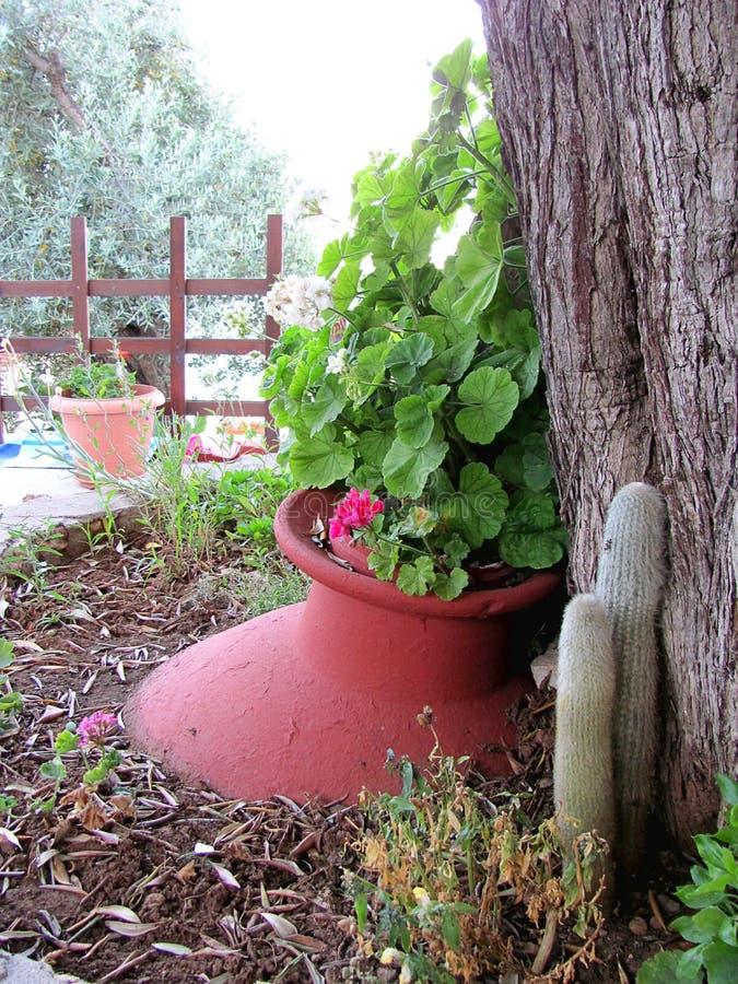 Blumenpotentiometer im Garten stockfotos