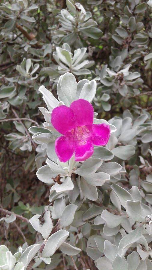 Blumenpurpur lizenzfreies stockbild